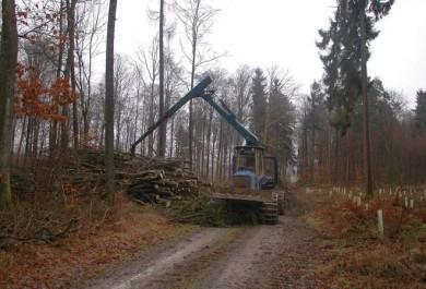 Rodungsarbeiten für Windpark bei Gerichtstetten haben begonnen