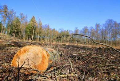 Hardheim: Kritik an Rodungen für Windpark Gerichtstetten